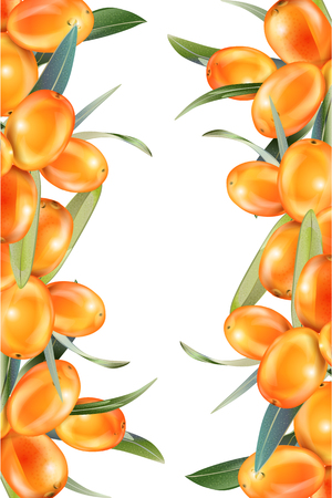 Sea buckthorn isolated on the white. Illustration in 3d style. The concept of realistic image of medical plants, herbs. Designed to create package of health, beauty natural products