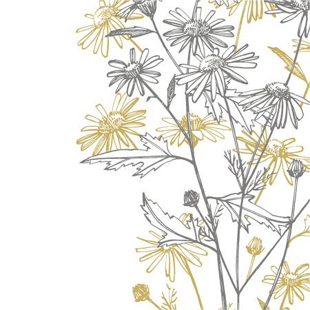 Chamomile or daisy flower. Botanical illustration. Good for cosmetics, medicine, treating, aromatherapy, nursing, package design, field bouquet. Hand drawn wild hay flowers.