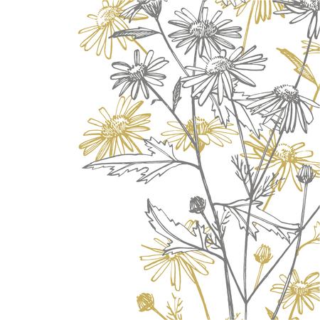 Kamille oder Gänseblümchen. Botanische Abbildung. Gut für Kosmetik, Medizin, Behandlung, Aromatherapie, Krankenpflege, Verpackungsdesign, Feldblumenstrauß. Handgezeichnete Wildheublumen.