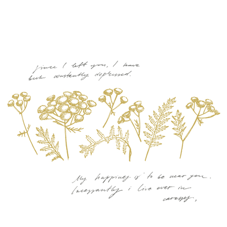 Tansy or daisy flower. Botanical illustration. Good for cosmetics, medicine, treating, aromatherapy, package design, field bouquet. Handwritten abstract text wallpaper. Imitation of a abstract vintage lettering.