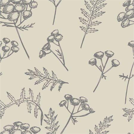 Tansy or daisy flower. Botanical illustration. Good for cosmetics, medicine, treating, aromatherapy, nursing, package design, field bouquet. Hand drawn wild hay flowers. Seamless pattern. Zdjęcie Seryjne
