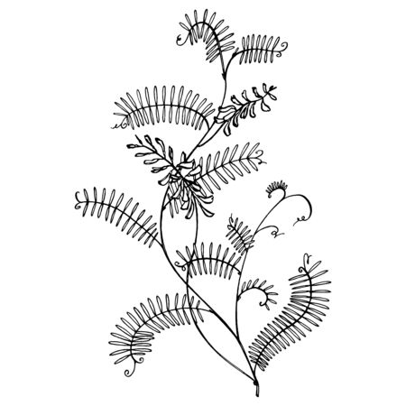 Branch of wild plant Vicia cracca. Tufted Vetch or Vicia cracca, vintage engraved illustration. Botanical illustration. Good for cosmetics, medicine, treating, aromatherapy, nursing, package design, field bouquet. Hand drawn wild hay flowers Фото со стока