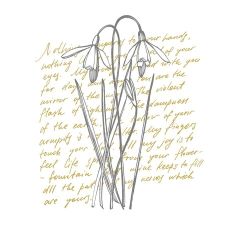 Snowdrop spring flowers. Botanical plant illustration. Vintage medicinal herbs sketch set of ink hand drawn medical herbs and plants sketch. Handwritten abstract text wallpaper. Stock Photo
