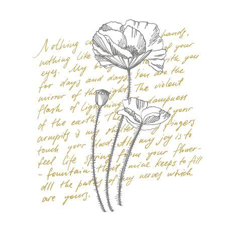 Poppy flowers. Botanical plant illustration. Vintage medicinal herbs sketch set of ink hand drawn medical herbs and plants sketch. Handwritten abstract text.