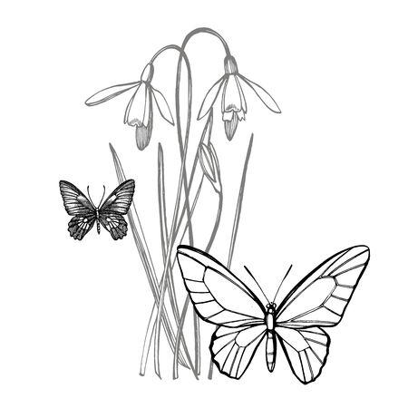 Snowdrop spring flowers. Botanical plant illustration. Vintage medicinal herbs sketch set of ink hand drawn medical herbs and plants sketch
