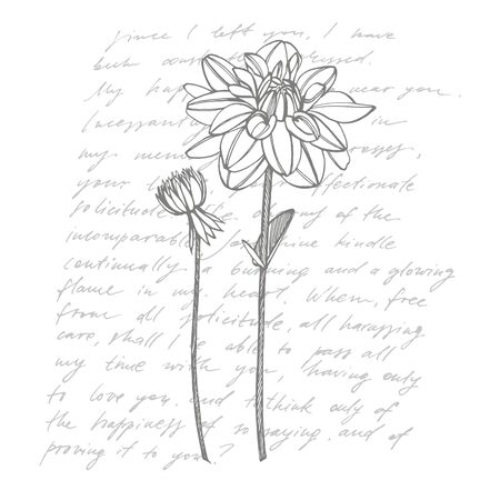 Hand-drawn ink dahlias. Floral elements. Graphic flowers illustrations. Botanical plant illustration. Handwritten abstract text