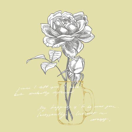 Roses. Hand drawn flower set illustrations. Botanical plant illustration. Handwritten abstract text.