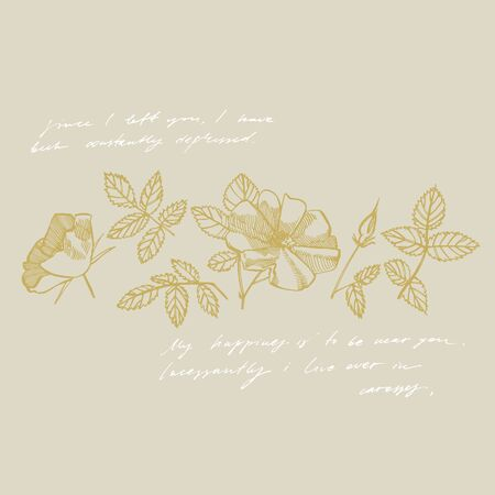 Wild rose flowers drawing and sketch illustrations. Decorative floral set for fabric, textile, wrapping paper, card, invitation, wallpaper, web design. Handwritten abstract text