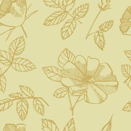 Wild rose flowers drawing and sketch illustrations. Decorative floral set for fabric, textile, wrapping paper, card, invitation, wallpaper, web design. Seamless patterns Stok Fotoğraf