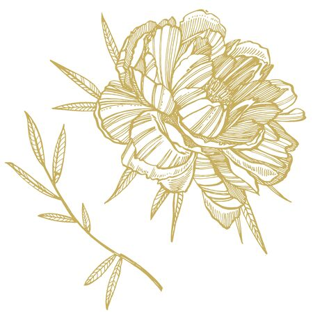 Peony flower and leaves drawing. Hand drawn engraved floral set. Botanical illustrations. Great for tattoo, invitations, greeting cards