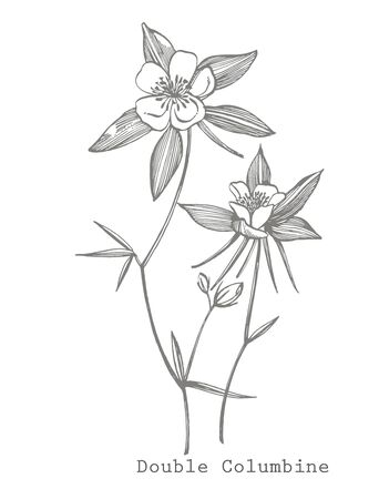 Double Columbine flowers. Black and white illustration in the style of engravings