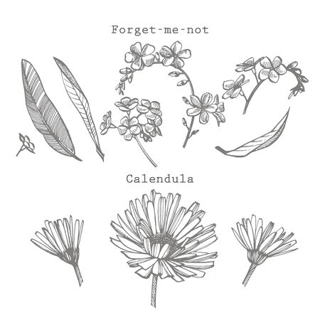 Forget-me-not and Calendula flowers. Botanical illustration. Stok Fotoğraf