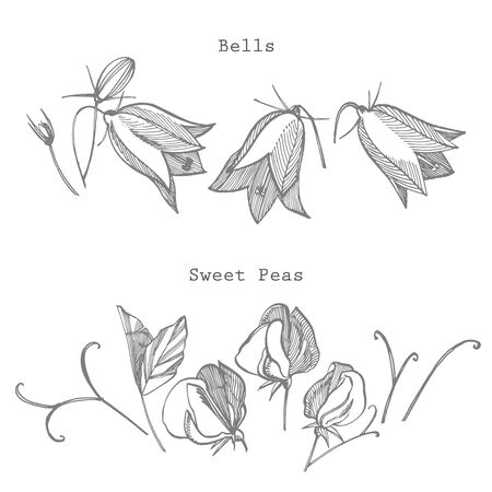 Sweet pea and Bells flowers drawing and sketch with line-art on white backgrounds. Floral pattern with flowers of sweet peas. Elegant the template for fabric, paper, postcard
