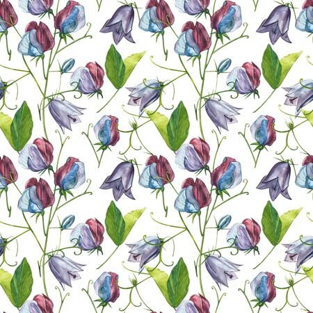 Seamless patterns. Watercolor set of Sweet Peas flowers and leaves, hand drawn floral illustration isolated on a white background. Collection garden and wild herb, flowers, branches. Botanical art. Stock Illustration - 129417815
