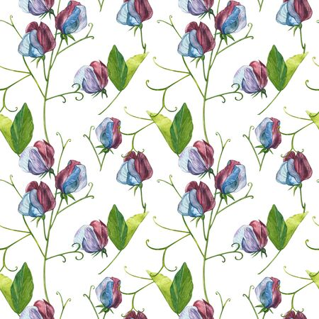 Seamless patterns. Watercolor set of Sweet Peas flowers and leaves, hand drawn floral illustration isolated on a white background. Collection garden and wild herb, flowers, branches. Botanical art. Stock Photo