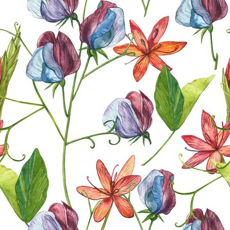 Seamless patterns. Watercolor set of Sweet Peas flowers and leaves, hand drawn floral illustration isolated on a white background. Collection garden and wild herb, flowers, branches. Botanical art. Stock Illustration - 129418022