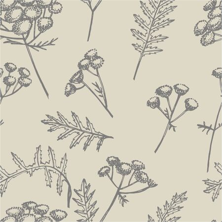 Tansy or daisy flower. Botanical illustration. Good for cosmetics, medicine, treating, aromatherapy, nursing, package design, field bouquet. Hand drawn wild hay flowers. Seamless pattern. Ilustracja