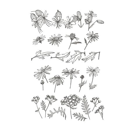 Collection of hand drawn flowers and herbs. Botanical plant illustration. Vintage medicinal herbs sketch set of ink hand drawn medical herbs and plants sketch