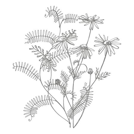 Branch of wild plant Vicia cracca. Tufted Vetch or Vicia cracca, vintage engraved illustration. Bouquet of hand drawn flowers and herbs. Botanical plant illustration