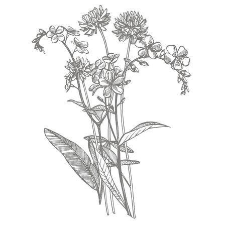 Zweig der Wildpflanze Vergissmeinnicht und Klee. Vintage gravierte Darstellung. Bouquet von handgezeichneten Blumen und Kräutern. Botanische Pflanzenillustration