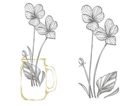 Pansy or daisy flower. Botanical illustration. Good for cosmetics, medicine, treating, aromatherapy, nursing, package design, field bouquet. Hand drawn wild hay flowers Vettoriali