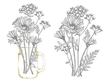 Blaue Kornblume-Kraut- oder Junggesellen-Knopfblumenblumenstrauß lokalisiert auf weißem Hintergrund. Satz von Zeichnungskornblumen, florale Elemente, handgezeichnete botanische Illustration