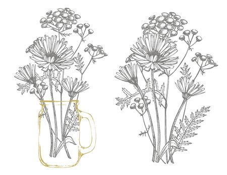 Blue Cornflower Herb or bachelor button flower bouquet isolated on white background. Set of drawing cornflowers, floral elements, hand drawn botanical illustration