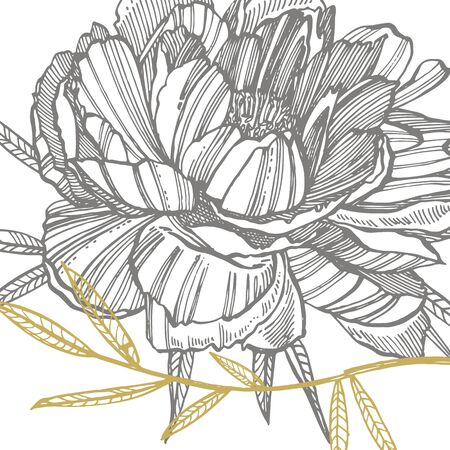 Peony flower and leaves drawing. Hand drawn engraved floral set. Botanical illustrations. Great for tattoo, invitations, greeting cards. Иллюстрация