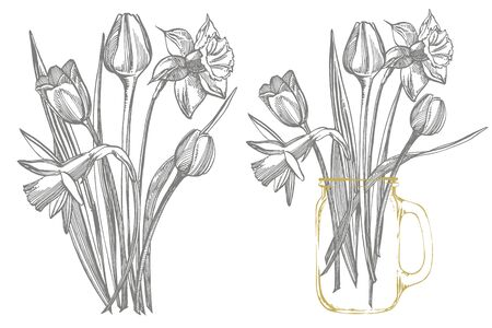 Tulips and Narcissus flowers bouquet isolated on white background. Set of drawing cornflowers, floral elements, hand drawn botanical illustration