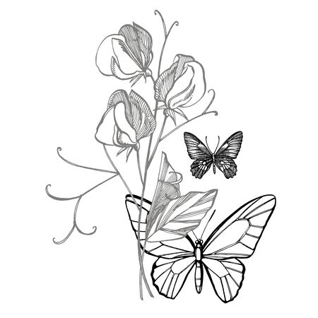 Sweet pea flowers drawing and sketch with line-art on white backgrounds. Floral pattern with flowers of sweet peas. Elegant the template for fabric, paper, postcard. Butterfly. Vetores