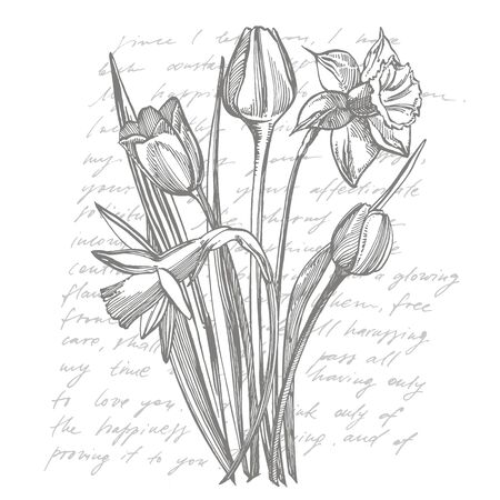 Tulips and Narcissus flowers bouquet isolated on white background. Set of drawing cornflowers, floral elements, hand drawn botanical illustration. Handwritten abstract text  イラスト・ベクター素材