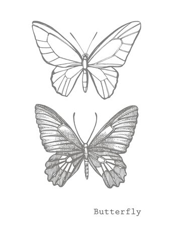 Butterflies silhouettes. Butterfly icons isolated on white background. Graphic illustration.  イラスト・ベクター素材