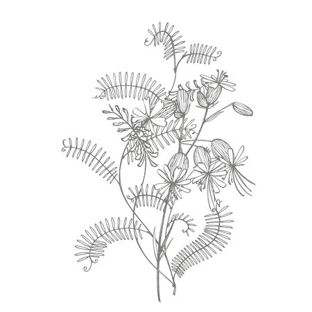 Branch of wild plant Vicia cracca. Tufted Vetch or Vicia cracca, vintage engraved illustration. Bouquet of hand drawn flowers and herbs. Botanical plant illustration Foto de archivo - 131608150