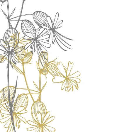 Bladder campion flowers. Set of drawing cornflowers, floral elements, hand drawn botanical illustration. Good for cosmetics, medicine, treating, aromatherapy, nursing, package design, field bouquet. Hand drawn wild hay flowers
