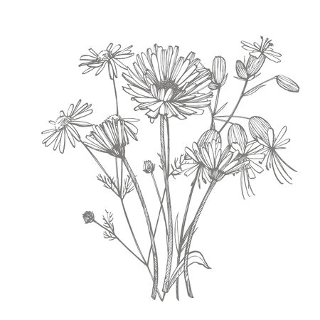 Tansy and Chamomile. Bouquet of hand drawn flowers and herbs. Botanical plant illustration. Handwritten abstract text wallpaper  イラスト・ベクター素材