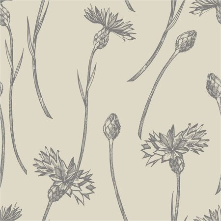 Blue Cornflower Herb or bachelor button flower bouquet isolated on white background. Set of drawing cornflowers, floral elements, hand drawn botanical illustration. Seamless pattern  イラスト・ベクター素材