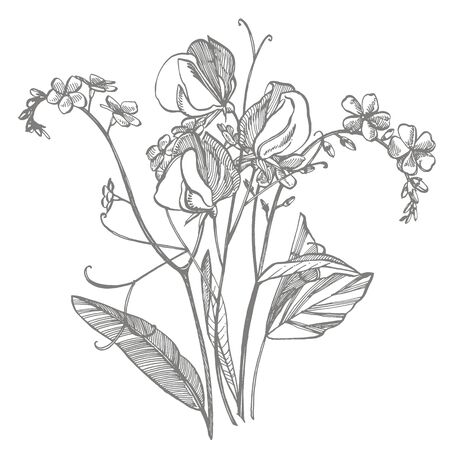 Branch of wild plant Forget-me-not and sweet peas. Vintage engraved illustration. Bouquet of hand drawn flowers and herbs. Botanical plant illustration