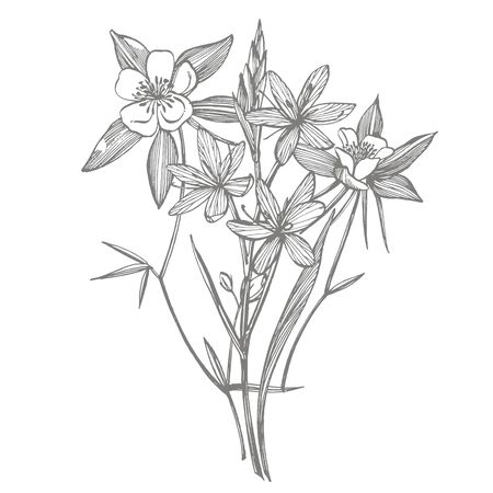 Collection of hand drawn flowers and plants. Botany. Set. Vintage flowers. Black and white illustration in the style of engravings  イラスト・ベクター素材