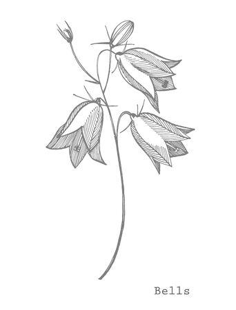 Bellflower blossoms, leaves and bouquets set. Natural summer, spring meadow plants monochrome. Floral natural illustration for poster, textile decoration. Botanical plant illustration.