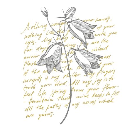 Bellflower blossoms, leaves and bouquets set. Natural summer, spring meadow plants monochrome. Floral natural illustration for poster, textile decoration. Botanical plant illustration. Handwritten abstract text wallpaper