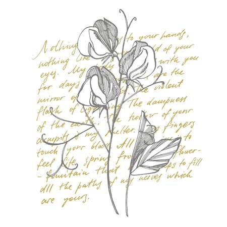 Sweet pea flowers drawing and sketch with line-art on white backgrounds. Botanical plant illustration. Handwritten abstract text
