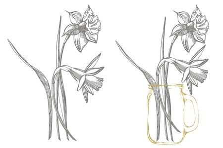 Daffodil or Narcissus flower drawings. Collection of hand drawn black and white daffodil. Hand Drawn Botanical Illustrations Иллюстрация