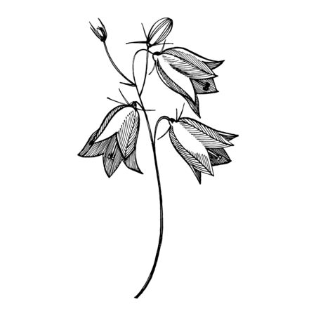 Bellflower blossoms, leaves and bouquets set. Natural summer, spring meadow plants monochrome. Floral natural illustration for poster, textile decoration. Botanical plant illustration