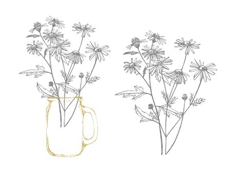 Tansy and Chamomile. Bouquet of hand drawn flowers and herbs. Botanical plant illustration Illustration