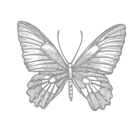 Butterflies silhouettes. Butterfly icons isolated on white background. Graphic illustration