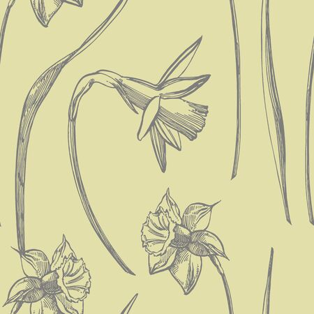 Daffodil or Narcissus flower drawings. Collection of hand drawn black and white daffodil. Hand Drawn Botanical Illustrations. Seamless patterns.