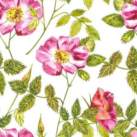Botanical wild rose flower watercolor. Watercolor set of rose hip flowers and leaves, hand drawn floral illustration isolated on a white background. Seamless patterns.
