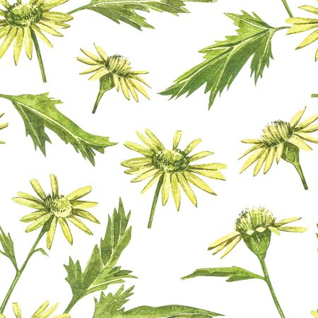 Chamomile or Daisy bouquets, yellow flowers. Realistic botanical sketch on white background for design, hand draw illustration in botanical style. Seamless patterns. Stock Photo
