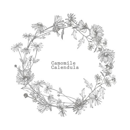 Chamomile. Collection of hand drawn flowers and plants. Botany. Set. Vintage flowers. Black and white illustration in the style of engravings. Stock Vector - 132956076