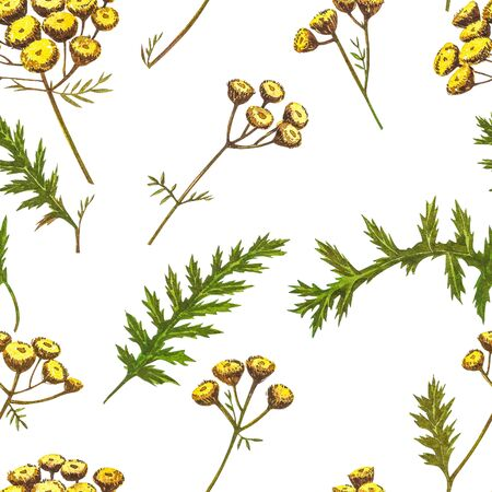 Wildflowers medicinal tansy watercolor illustrations. Isolated on the white background. Blossom, herbarium plant. Accurate botanical illustration. Seamless patterns Stock Illustration - 132956099